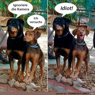 Idiot.png von Fabi
